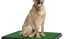 Artificial Grasses For Dogs